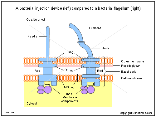A bacterial injection device (left) compared to a bacterial flagellum (right), PPT PowerPoint drawing diagrams, templates, images, slides