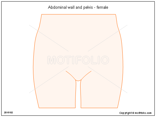 Abdominal wall and pelvis female illustrations abdominal ccuart Image collections