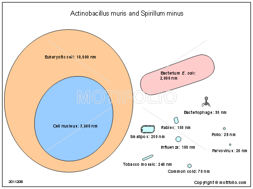 Actinobacillus
