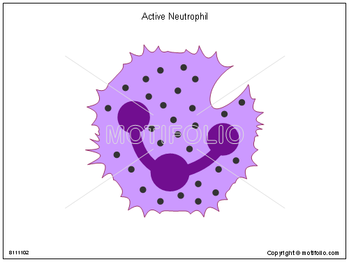 Active Neutrophil, PPT PowerPoint drawing diagrams, templates, images, slides