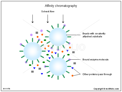 Affinity chromatography, PPT PowerPoint drawing diagrams, templates, images, slides
