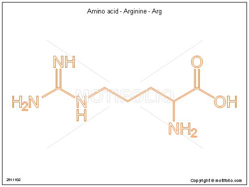 Arginine Line Diagram Illustration Of Wiring Diagram
