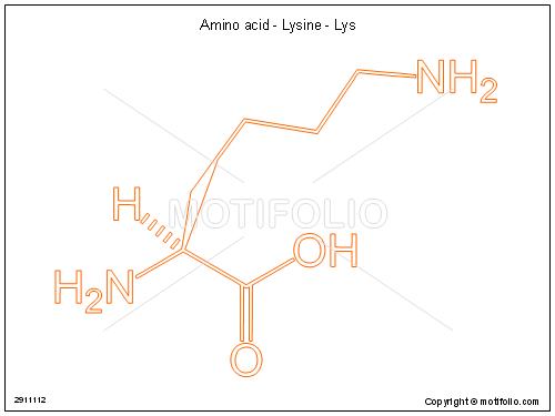 Amino acid - Lysine - Lys