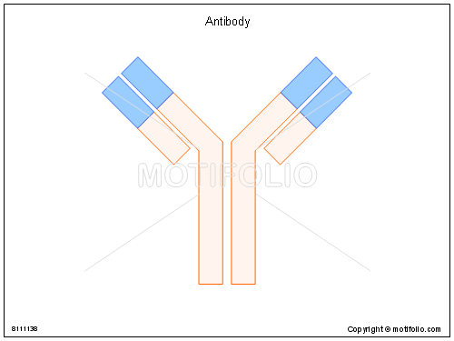 Antibody, PPT PowerPoint drawing diagrams, templates, images, slides