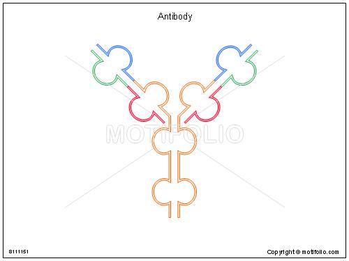 Antibody,