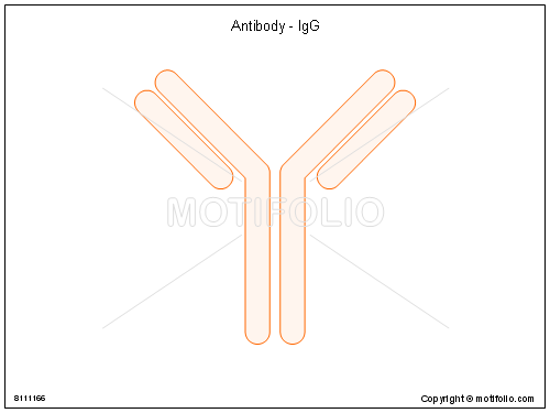 Antibody IgG, PPT PowerPoint drawing diagrams, templates, images, slides