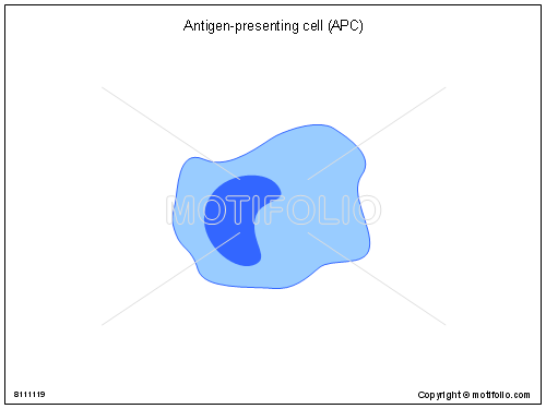 Antigen-presenting cell APC, PPT PowerPoint drawing diagrams, templates, images, slides