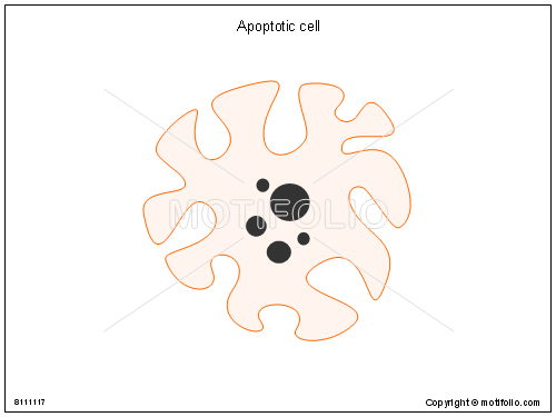 Apoptotic cell, PPT PowerPoint drawing diagrams, templates, images, slides