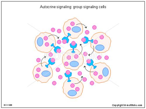 Autocrine signaling group signaling cells illustrations autocrine title autocrine signaling group signaling cells ccuart Image collections
