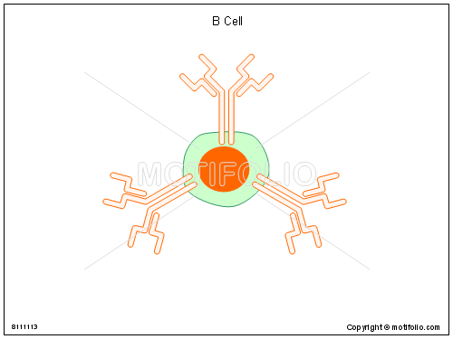 B Cell, PPT PowerPoint drawing diagrams, templates, images, slides