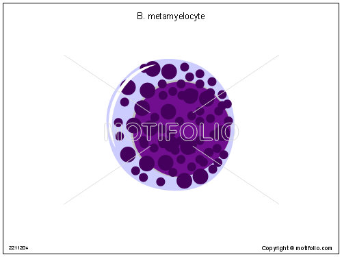 B metamyelocyte, PPT PowerPoint drawing diagrams, templates, images, slides