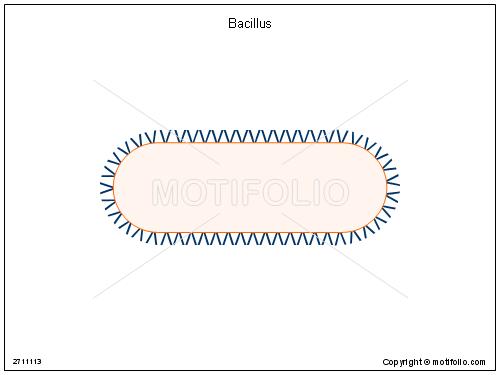 bacillus illustrations rh motifolio com bacillus cereus diagram bacillus labelled diagram