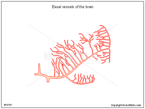 Basal vessels of the brain, PPT PowerPoint drawing diagrams, templates, images, slides