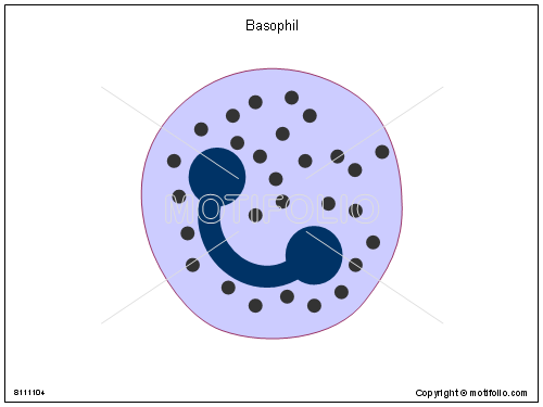 Basophil, PPT PowerPoint drawing diagrams, templates, images, slides