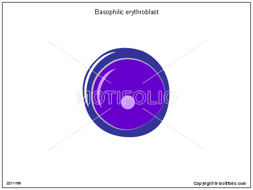 Basophilic erythroblast, PPT PowerPoint drawing diagrams, templates, images, slides