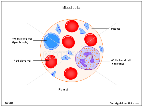 blood cells illustrations