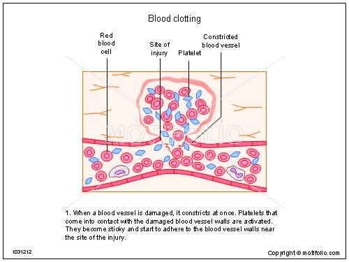 Blood clotting PPT PowerPoint drawing diagrams, templates, images ...