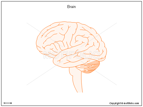 Brain, PPT PowerPoint drawing diagrams, templates, images, slides