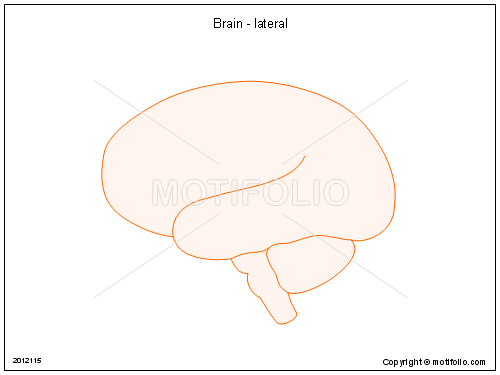Brain - lateral, PPT PowerPoint drawing diagrams, templates, images, slides