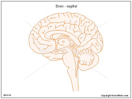 Brain - sagittal, PPT PowerPoint drawing diagrams, templates, images, slides