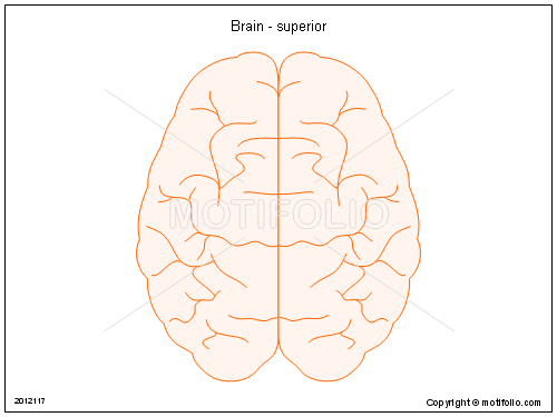 Brain - superior, PPT PowerPoint drawing diagrams, templates, images, slides