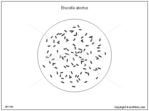 Brucella abortus, PPT PowerPoint drawing diagrams, templates, images, slides