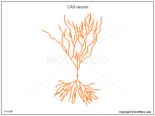 CA3 neuron, PPT PowerPoint drawing diagrams, templates, images, slides