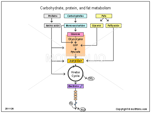 Carbohydrate protein and fat metabolism, PPT PowerPoint drawing diagrams, templates, images, slides