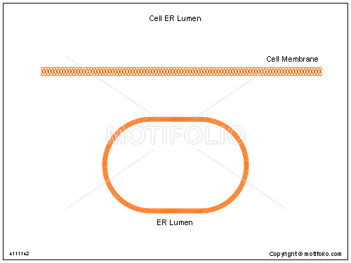 Cell ER Lumen, PPT PowerPoint drawing diagrams, templates, images, slides
