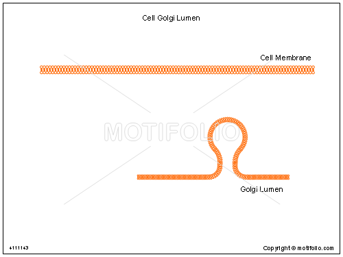 Cell Golgi Lumen, PPT PowerPoint drawing diagrams, templates, images, slides