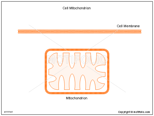Cell mitochondrion illustrations keywords cell mitochondrion illustrationfiguredrawingdiagramimage ccuart Gallery
