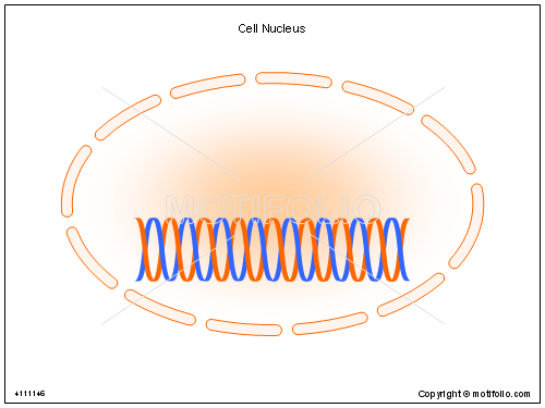 Cell nucleus illustrations cell title cell nucleus ccuart Images
