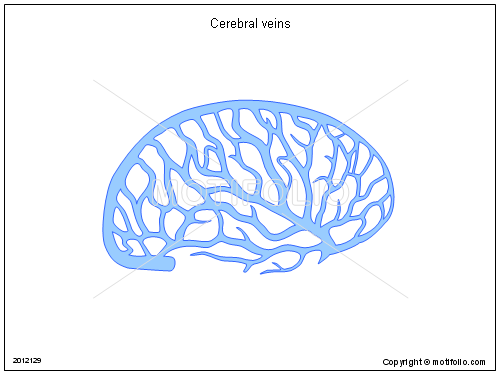 Cerebral veins, PPT PowerPoint drawing diagrams, templates, images, slides