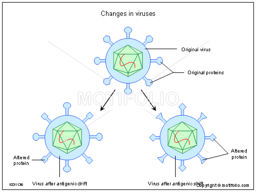 Changes in viruses, PPT PowerPoint drawing diagrams, templates, images, slides