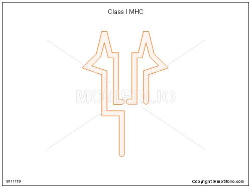 Class I MHC, PPT PowerPoint drawing diagrams, templates, images, slides