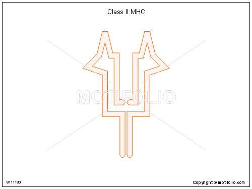 Class II MHC, PPT PowerPoint drawing diagrams, templates, images, slides