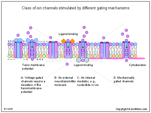 Class of ion channels stimulated by different gating mechanisms, PPT PowerPoint drawing diagrams, templates, images, slides