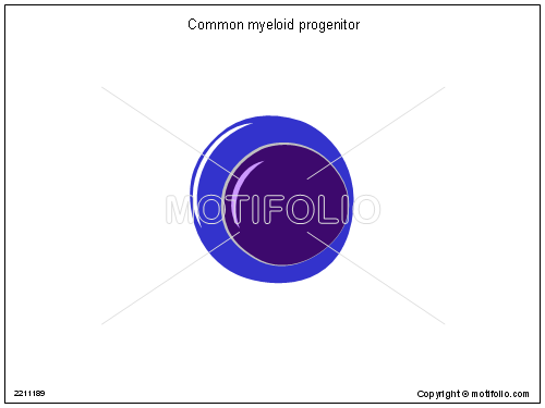 Common myeloid progenitor, PPT PowerPoint drawing diagrams, templates, images, slides