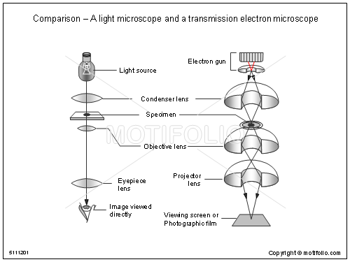 Comparison a light microscope and a transmission electron microscope comparison ccuart Choice Image