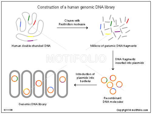 Top Keywords | Picture for Genomic Library Ppt
