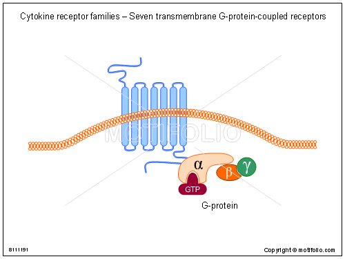 Cytokine receptor families - Seven transmembrane G-protein-coupled receptors, PPT PowerPoint drawing diagrams, templates, images, slides
