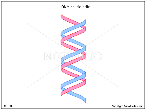 dna double helix ppt powerpoint drawing diagrams templates  : double helix diagram - findchart.co