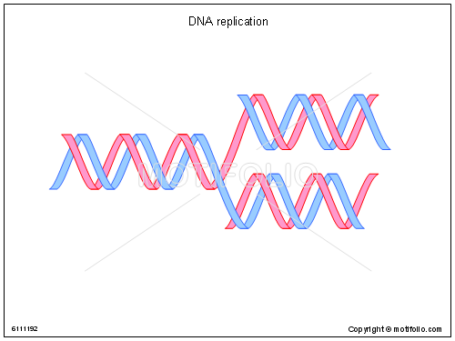 DNA replication, PPT PowerPoint drawing diagrams, templates, images, slides