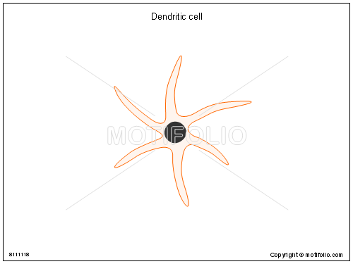 Dendritic Cells Diagram Dendritic Cell Ppt Powerpoint