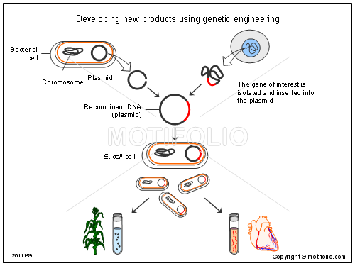 developing new products using genetic engineering ppt powerpoint  : genetic engineering diagram - findchart.co