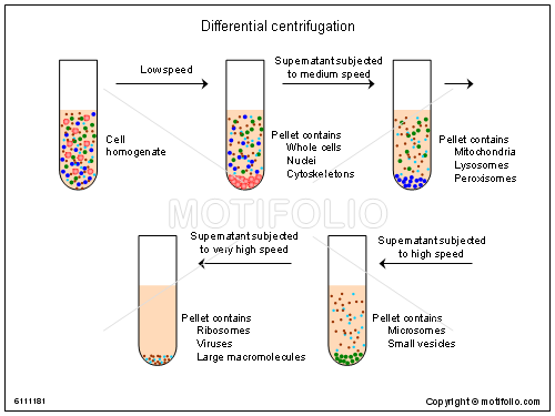 Differential centrifugation, PPT PowerPoint drawing diagrams, templates, images, slides