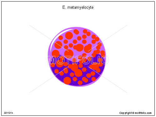 E metamyelocyte, PPT PowerPoint drawing diagrams, templates, images, slides