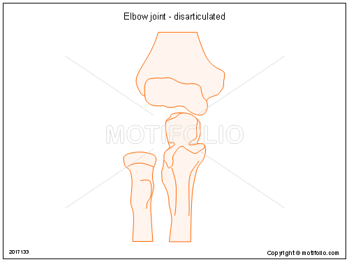 Elbow Joint Disarticulated Illustrations