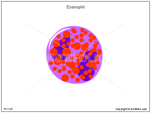 Eosinophil, PPT PowerPoint drawing diagrams, templates, images, slides