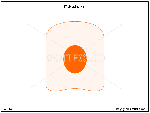 Epithelial